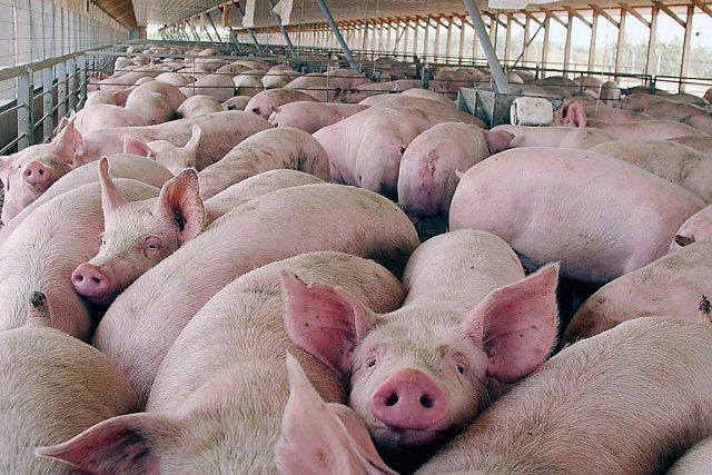 les-5-aliments-interdits-dans-le-secteur-alimentaire-mais-pas-aux-usa
