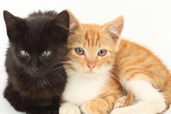 gmf 5 compagnies d 39 assurance pour chiens et chats. Black Bedroom Furniture Sets. Home Design Ideas