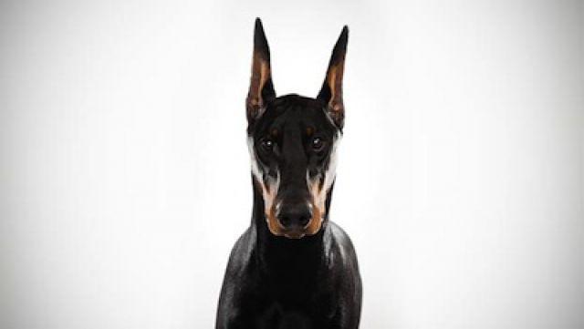 les-5-races-de-chiens-les-plus-intelligents