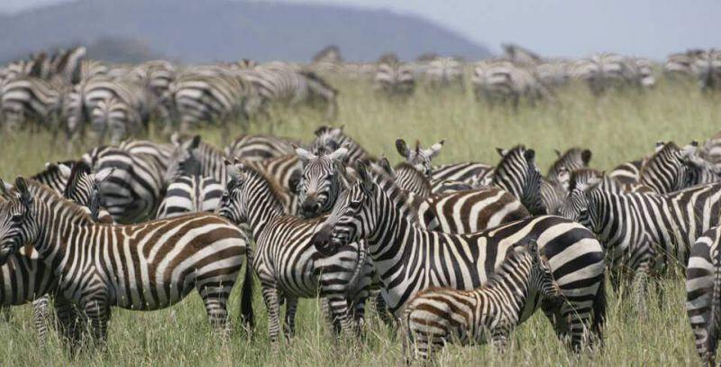 safari-tanzanie-les-5-choses-a-faire