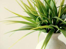 5-conseils-pour-rafraichir-votre-interieur-en-ete-sans-climatiseur