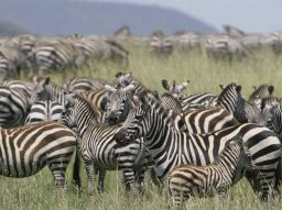 safari-tanzanie-les-5-choses-a-faire