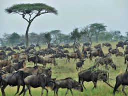 safari-tanzanie-5-conseils-pour-organiser-votre-voyage